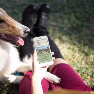 Website design for dog friendly Rosie Lea Kitchen