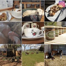 Instagram Management for Hockeys Farm